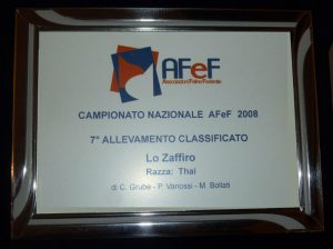 targa 2008